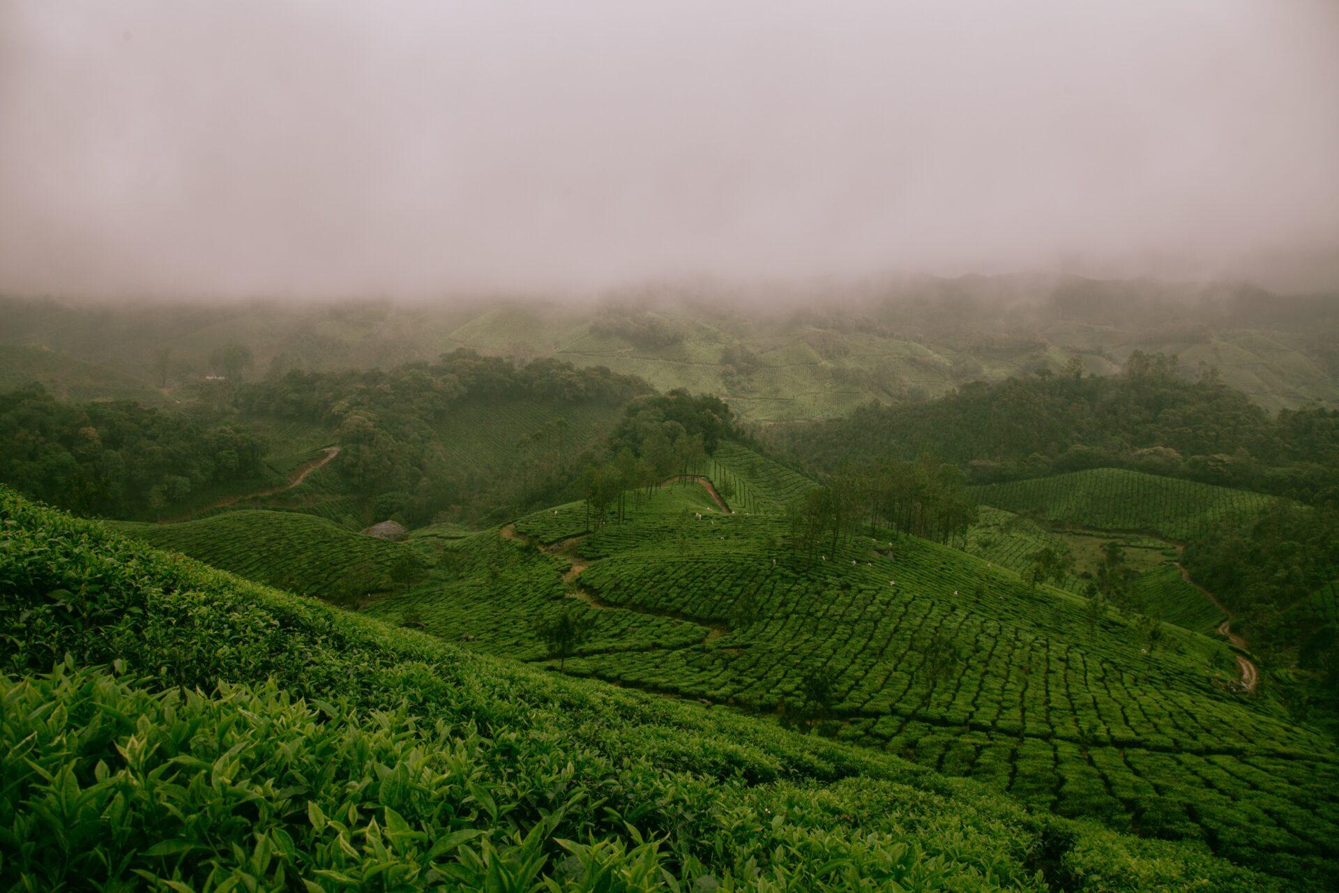 茶の実油(ティーオイル)の値段や効果と効能は?美容や健康に良い成分も多数配合!