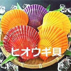 ヒオウギ貝(愛媛県)の値段や販売情報まとめ!色が違う理由や食べ方と保存方法も調査!