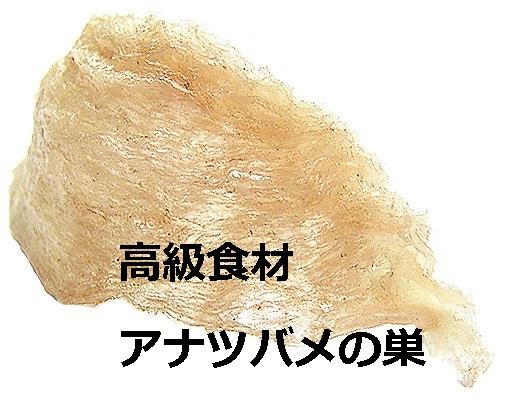 アナツバメの巣(マレーシア)の値段やお取り寄せ情報を調査!美容成分をドリンクとサプリで摂取!