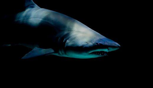 ニタリ(サメ)が見れる日本の水族館はドコ?名前の由来や狩りがスゴイ!