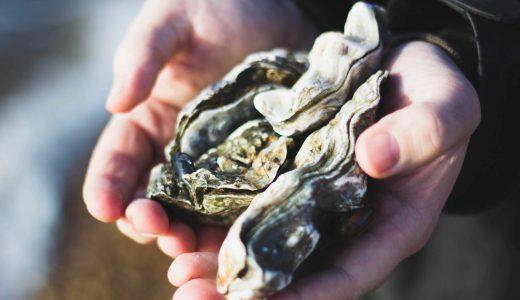 さこし忠臣蔵(さこし牡蠣)の特徴や味は?口コミや値段も調査!